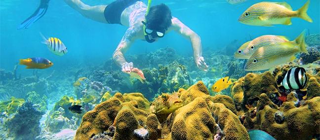 Puerto Morelos National Reef Park