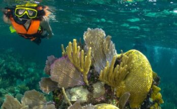 Puerto Morelos Reef Park Activities