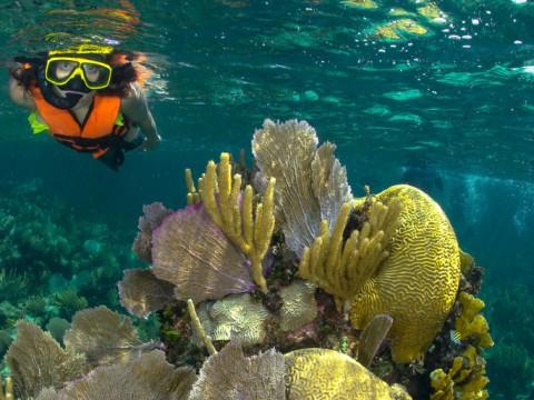 Puerto Morelos Reef Park Activities