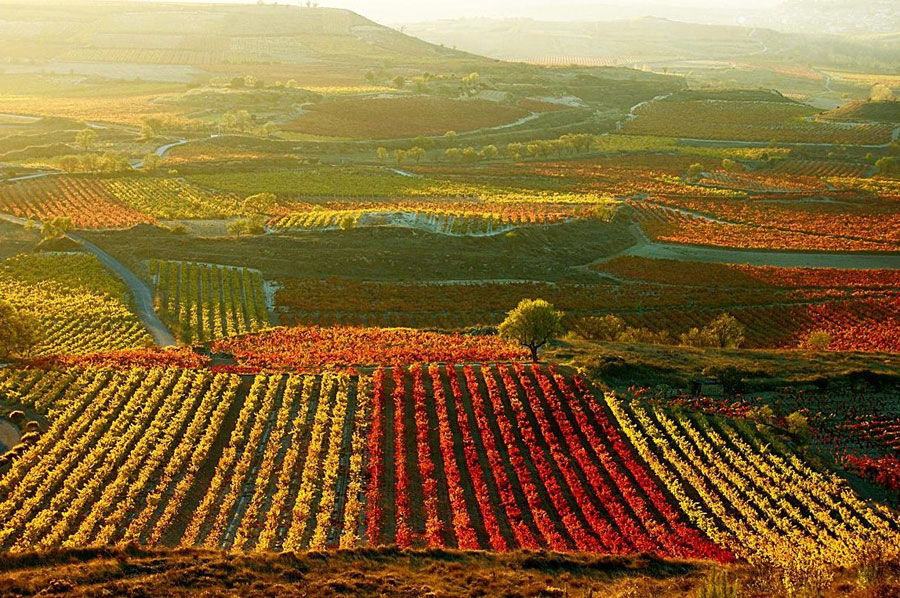 ruta del vino baja california