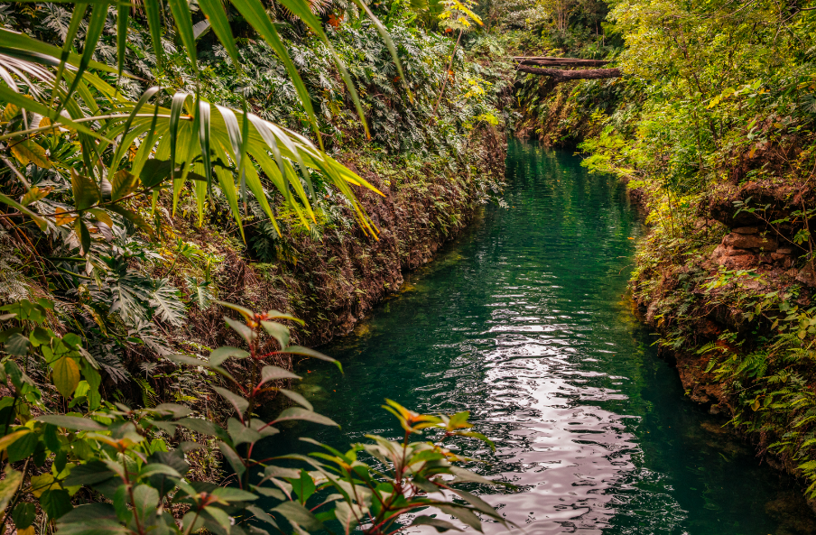 Things to do in Puerto Morelos Jungle Tour