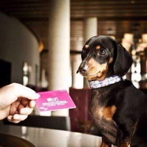 Aloft Cancun - dog friendly resorts